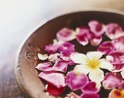 spa images hd flower petal flower pink spa white flowers petals plumeria