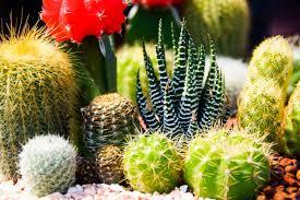 Cactus Garden Ideas 34 Sharp Cactus Garden Ideas