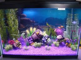 laurenj s freshwater tanks photo id 36779 version