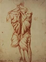 a rare glimpse of leonardo da vinci u0027s anatomical drawings