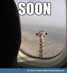 Drunk Giraffe Meme - distraction by carcarias meme center