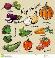 hand drawn vegetables royalty free stock image image 34383786