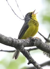 international ecotours u2014 audubon society of portland