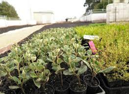 Roof Garden Plants Residential Roof Garden Archives Fytogreen Australia