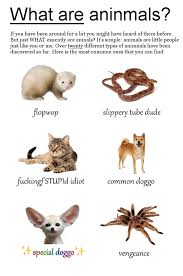 Different Kinds Of Memes - doggo know your meme