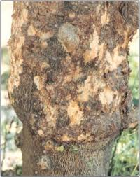 Plant Diseases Caused By Microorganisms - all about viruses viruses in bacteria plant and fungi