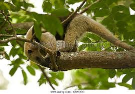 Tropical Dry Forest Animals And Plants - tropical dry forest stock photos u0026 tropical dry forest stock