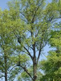 types of tree pruning northern virginia arlington fairfax