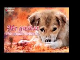 imagenes con frases de amor super tiernas 15 imágenes de perritos con frases de amor súper tiernas youtube