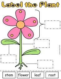 label the plant cut u0026 paste worksheet freebie by the treasured