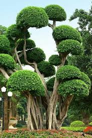 odditrees 20 interesting trees album on imgur