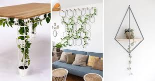 indoor vine plant 6 ways to include indoor vines in your interior contemporist