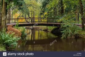 blackwater bridge rhinefield ornamental drive new forest stock