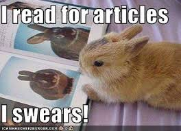 Bunny Meme - i read for articles funny bunny meme