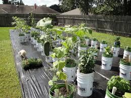 Vertical Kitchen Garden Outdoor And Patio Container Gardening Vegetables Over Concrete