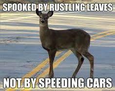 Oh Deer Meme - hunting season humor deer ready to burn down cabela s lol humor