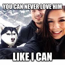 New Love Memes - jealous husky know your meme