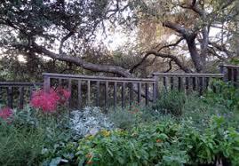 gardening with natives the santa barbara botanic garden