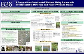 native wetland plants dr travis idol nrem design of a constructed wetland to treat
