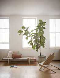 zen interiors ogk safari daybed minimalist chic fiddle leaf fig and fiddle leaf