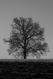 free photo winter tree winter trees nature free image on