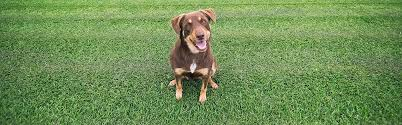 20 Great Dog Walks Around Sydney And Central Coast Australian Lawn Grubs Learn More About Lawn Diseases And Pests And Treatments