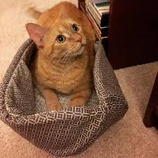 Modern Cat Bed Furniture by 460 Best Cat Ball Cat Bed Customer Photos Images On Pinterest