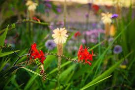 pretty flowers kew gardens london picture of royal botanic