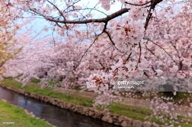 closeup view of beautiful flowers by the river bank of a