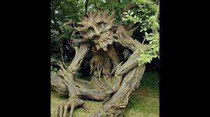 10 strange trees in the world mysterious trees 10 most strange