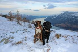 Dog Friendly Cottages Lake District by Dog Friendly Lake District Cottages Bring Your Dog For Free