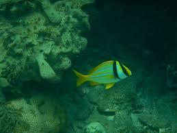 it u0027s sea urgent