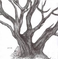 drawing realistic trees how to draw realistic looking leaves