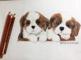 color pencil drawings 2 cute puppies by marccoronado on deviantart
