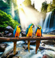 uv light for birds does uv light really help produce vitamin d3 in birds
