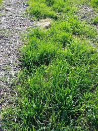 the urbane farmer vinegar salt soap u003d an organic weed killer