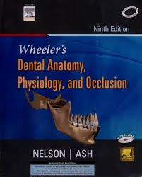 Best Anatomy And Physiology Textbook Wheeler U0027s Dental Anatomy Physiology And Occlusion 9th Edition