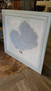 framed large grey sea fan mounted on linen with distressed