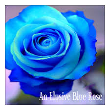 Blue Roses Rose Types Blue Roses