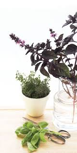 Herbs Indoors by 114 Best Edible Gardening Images On Pinterest Garden Ideas