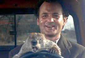 groundhog day 2015 the memes you need to see heavy com