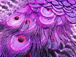 purple feather purple feathers wallpapers to your cell phone