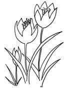 tulip coloring pages free coloring pages