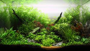 Live Plants In Community Aquariums by 5 Reasons Why Artificial Plants Are Better Than Live Plants Home
