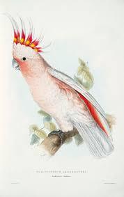 83 best parrots images on pinterest parrots pet birds and