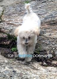 top 50 swedish dog names willowday