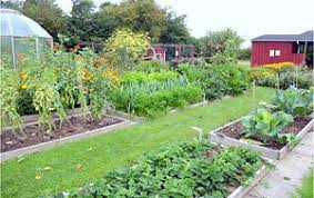 four bed crop rotation