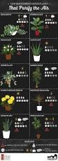 List Of Tropical Plants Names - house plants pictures and names best houseplant ideas on pinterest