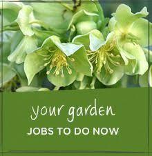 120 best cleaning up the garden images on pinterest garden ideas