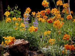 colorado native plants co horts easy native plant combinations for any yard